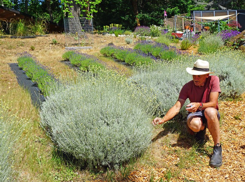 Lavender & Black is one of the most interesting Salt Spring Island attractions.