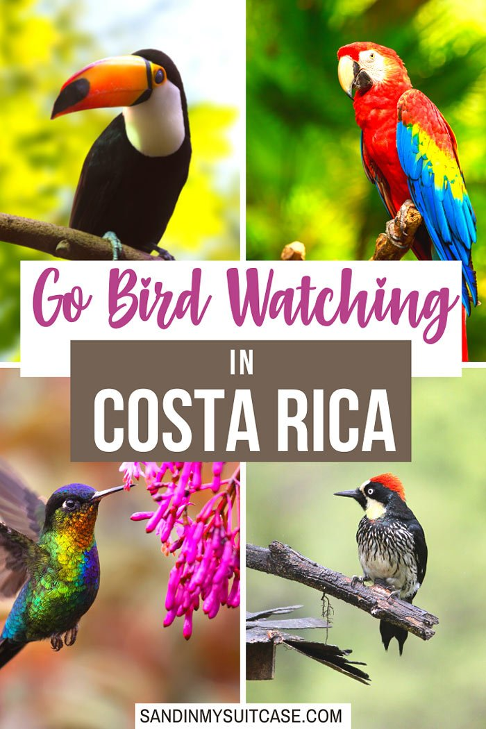 There are at least 17 very beautiful birds in Costa Rica!