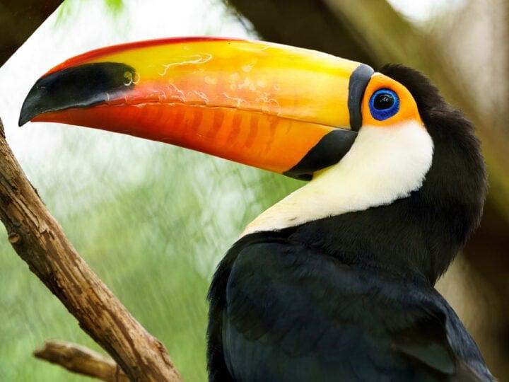 Beautiful Birds in Costa Rica
