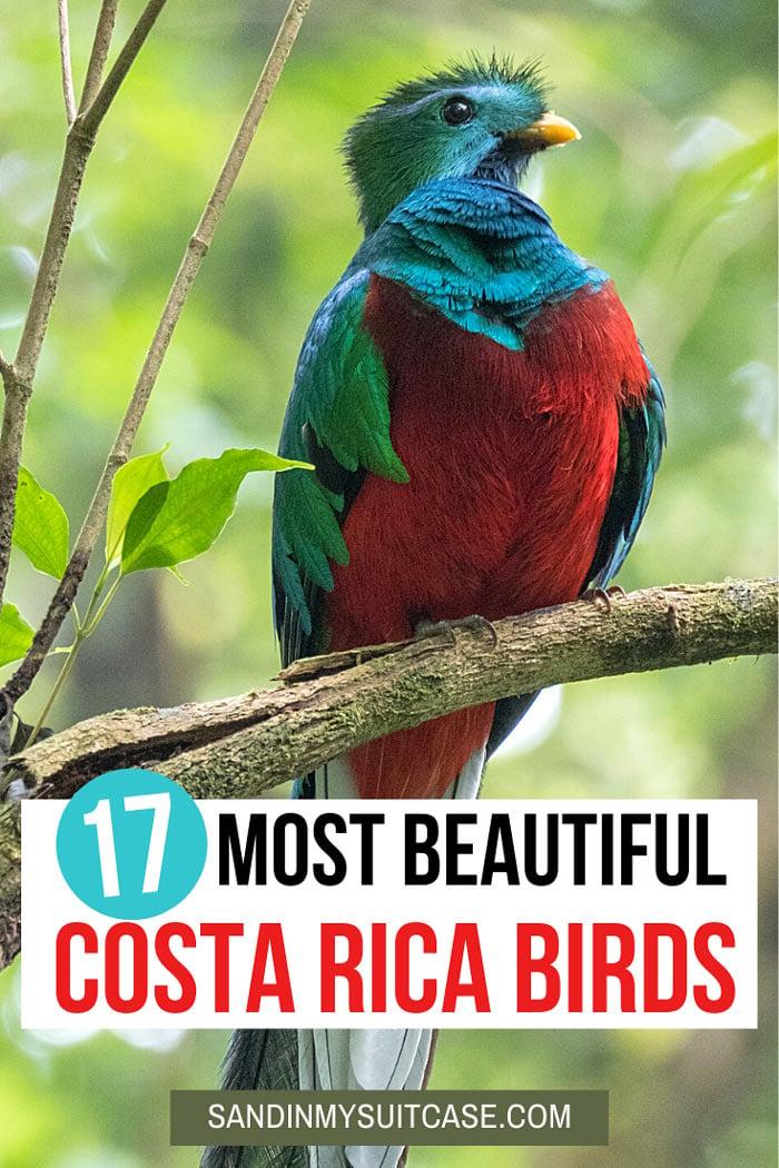 Beautiful Costa Rica birds