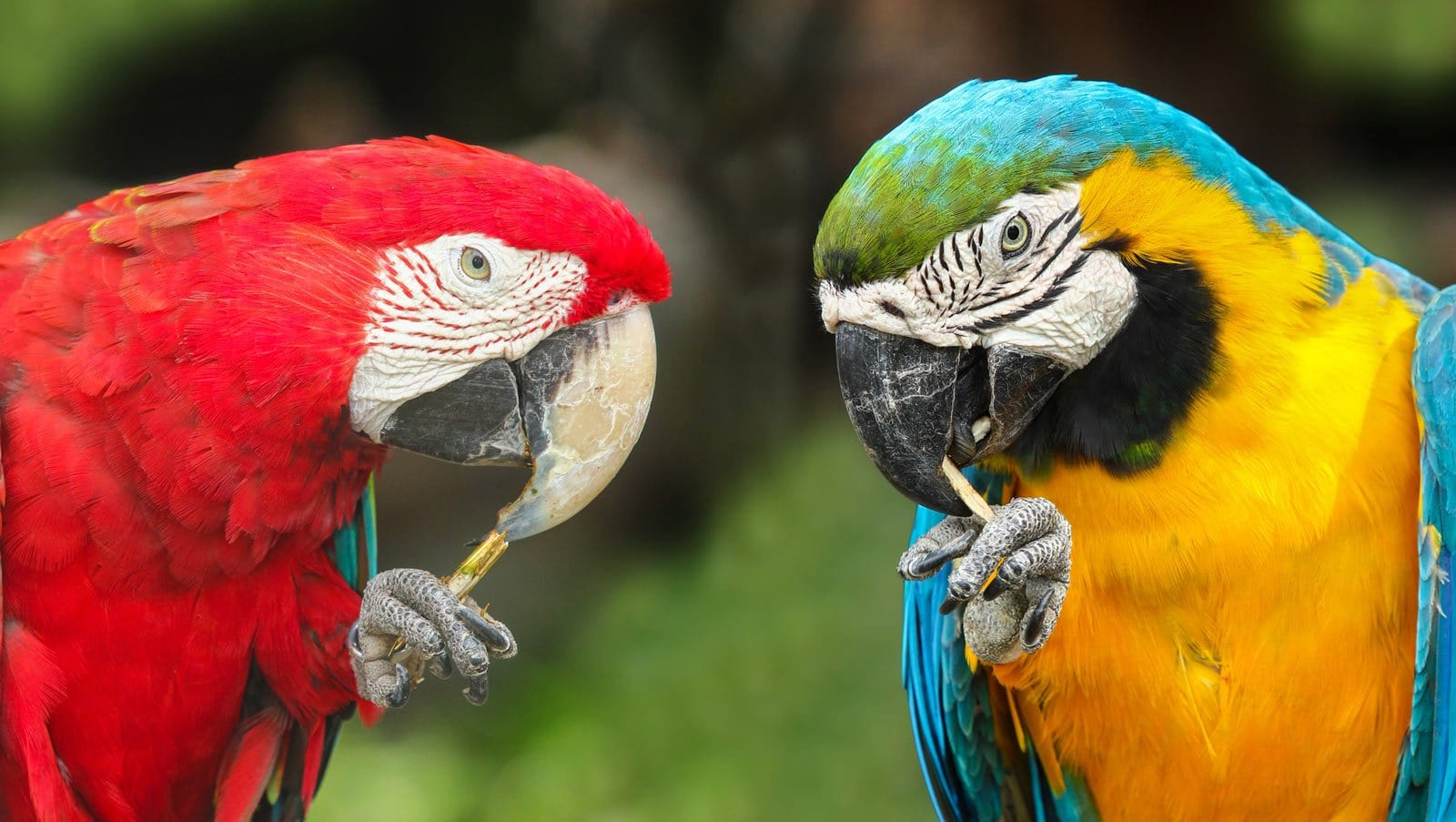 The most beautiful birds in Costa Rica include colorful macaws and parrots.