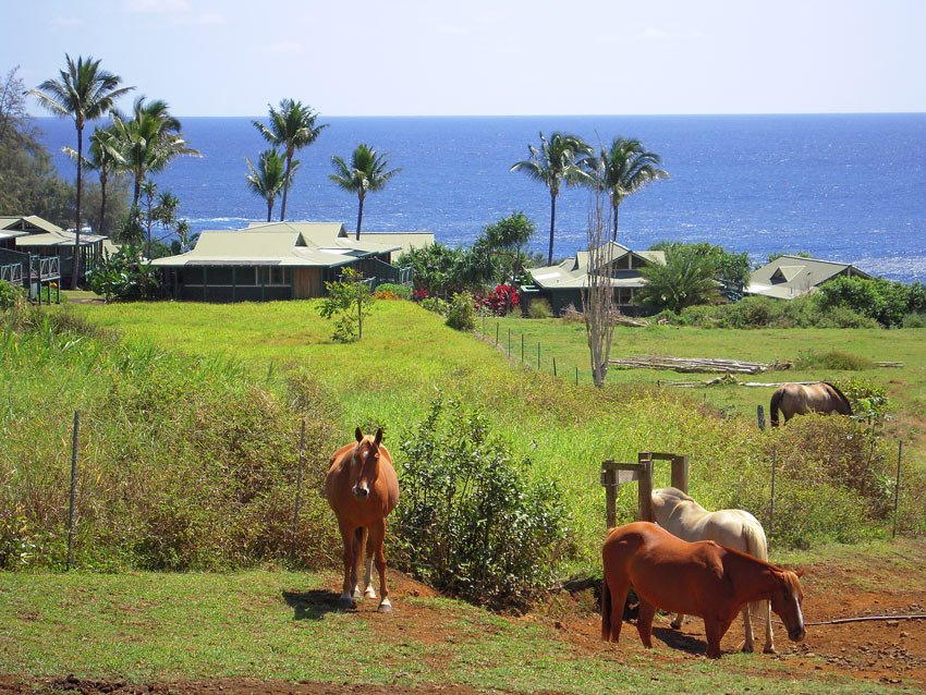 Fields with horses, rolling pastures and the sea - the Hana-Maui boasts a bucolic location in Hana, Maui.