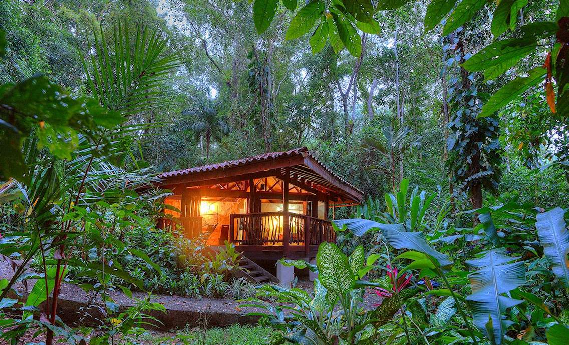At Playa Nicuesa Rainforest Lodge, wake up to the sounds of Scarlet Macaws in the rainforest!