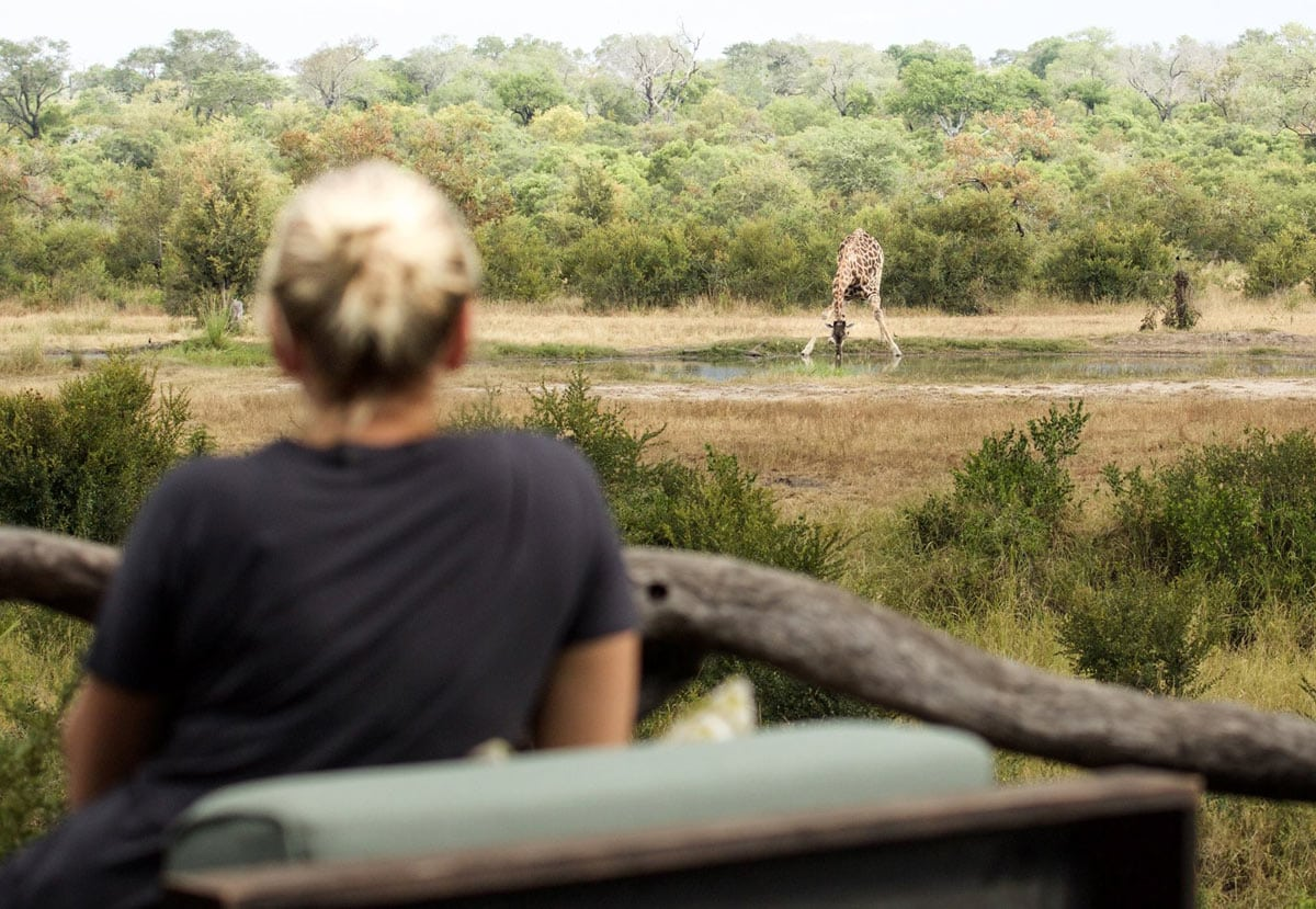 """We saw all the """"Big Five"""" at Simbambili Game Lode, including loads of lions, plus many other animals from giraffes to monkeys."""