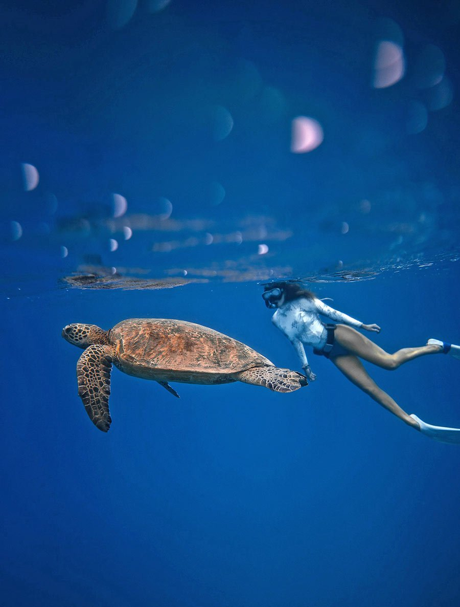 Don't miss swimming and snorkeling with sea turtles on Maui.
