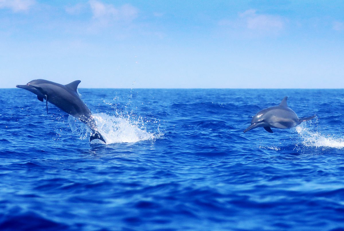 Fall in love with spinner dolphins in La Perouse Bay.