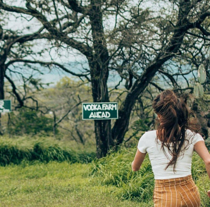 One of the more unusual things to do in Maui is to visit an organic vodka farm.
