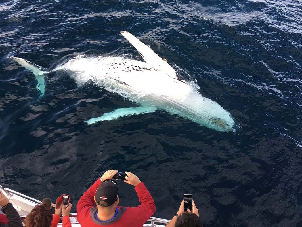 Whale watching on Maui is romantic, especially when you see whales up close!
