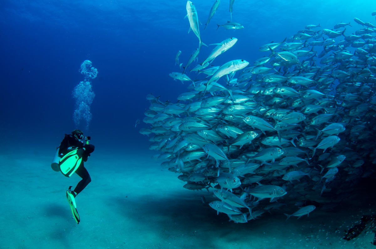 Imagine diving with a giant school of Trevally fish like this! Well, you can if you visit Cabo in October