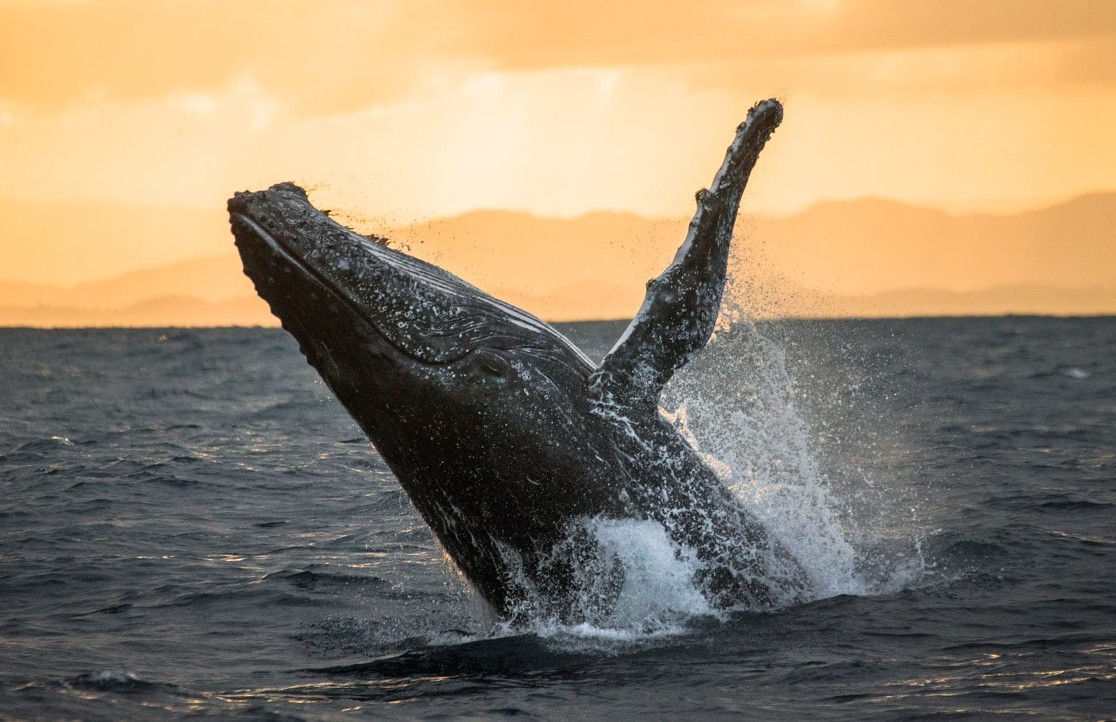 December to April is the whale watching season (February in Cabo is when the babies are most active)