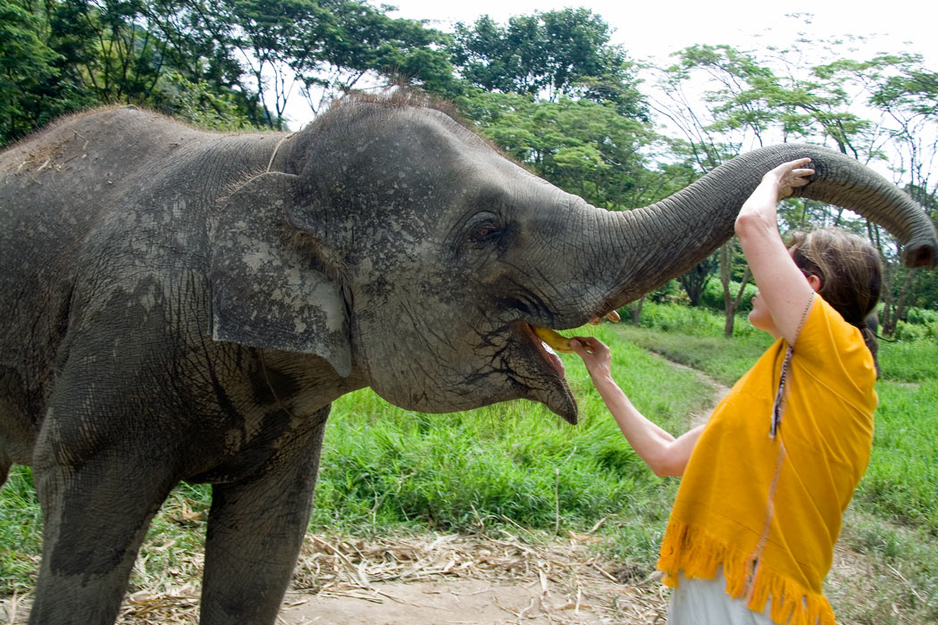 Caring for a baby elephant for a day is fine, just don't ride one.