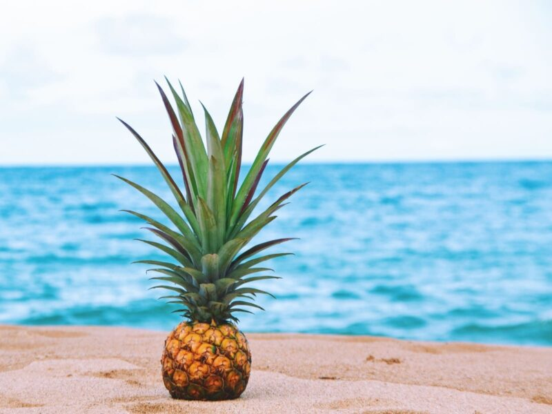 82 Super cool + fun facts about Hawaii!