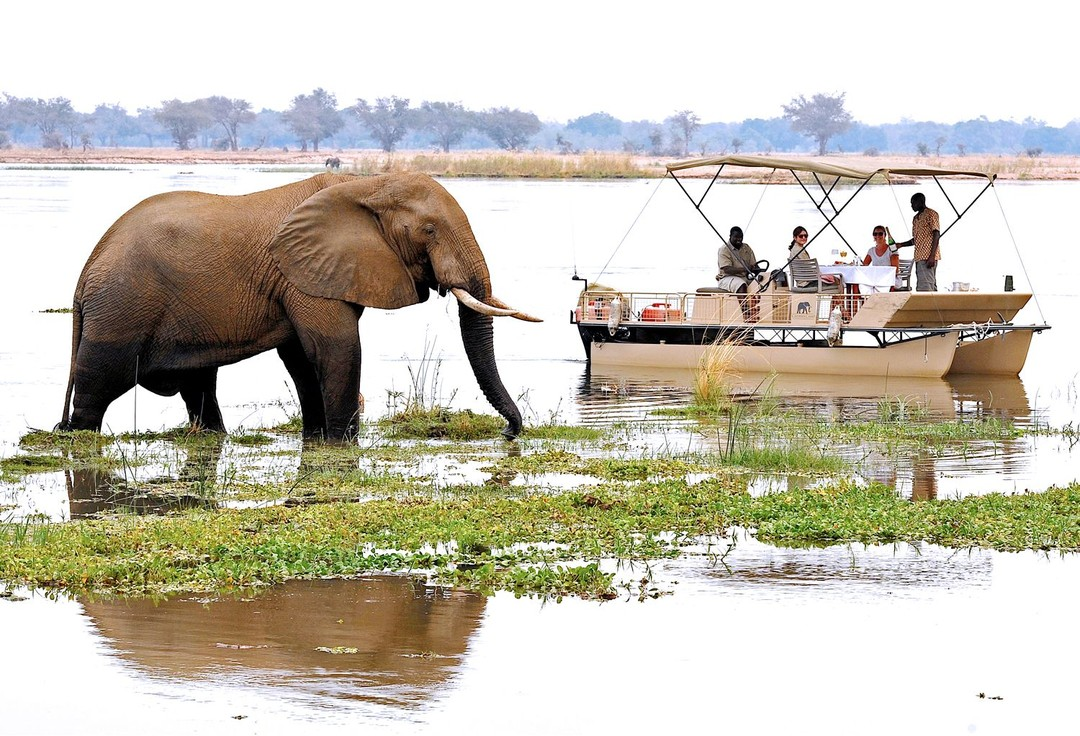 Watching elephants up close while lunching on a river boat is all par for the course on safari at Chiawa (Credit: Chiawa)